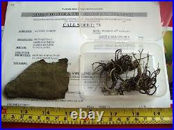 Harry Potter and the Prisoner of Azkaban Whomping Willow RARE Film Movie Prop
